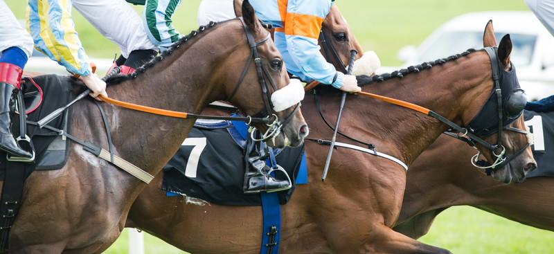 馬 レース